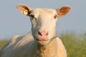How To Get Rid Of Gynecomastia - Livestock